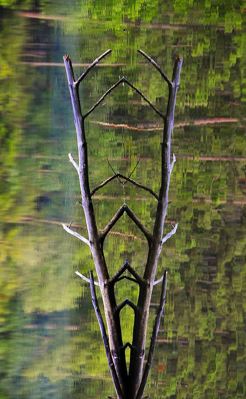 Photography Art Print featuring the photograph Jacob's Ladder by Skip Hunt