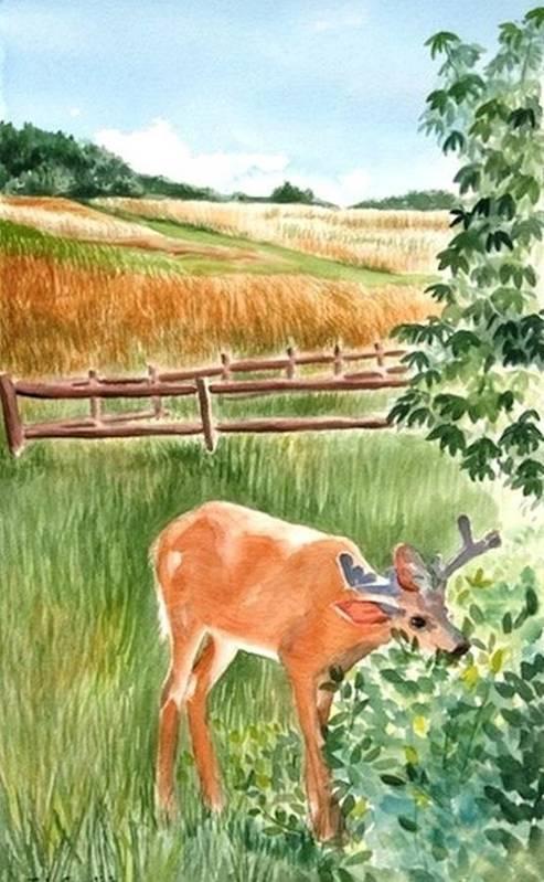 Deer Art Print featuring the painting Deer Eating Leaves by Judy Swerlick