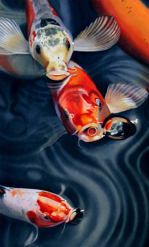 Koi Art Print featuring the painting Feeding Frenzy by Denny Bond