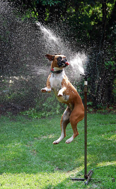 Dog Art Print featuring the photograph How To Handle A Heat Wave by Skip Willits