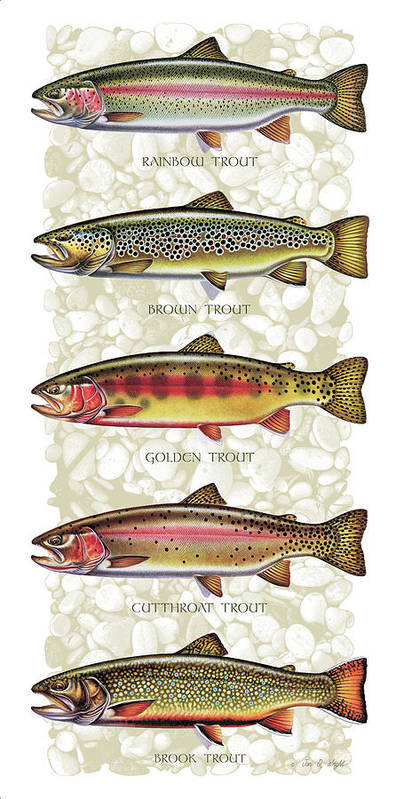 Five Trout Panel Art Print featuring the painting Five Trout Panel by JQ Licensing