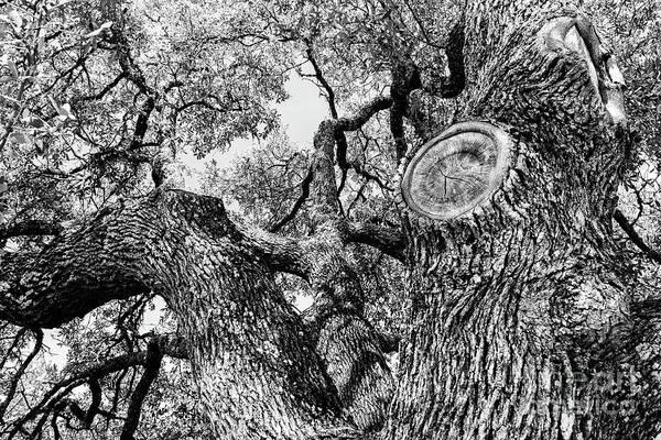Oak Tree Black and White by Jordan Schaefer