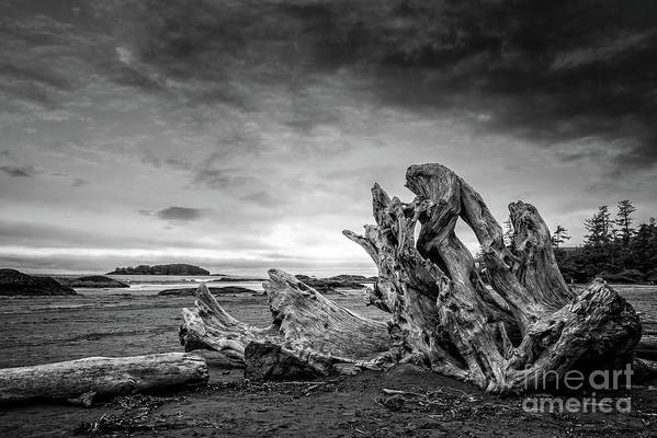 Driftwood on Chesterman beach in Tofino by Delphimages Photo Creations