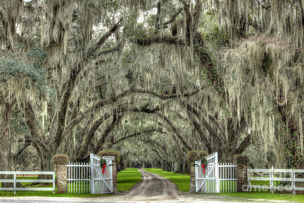 Tomotley Plantation Yamassee South Carolina by Dustin K Ryan