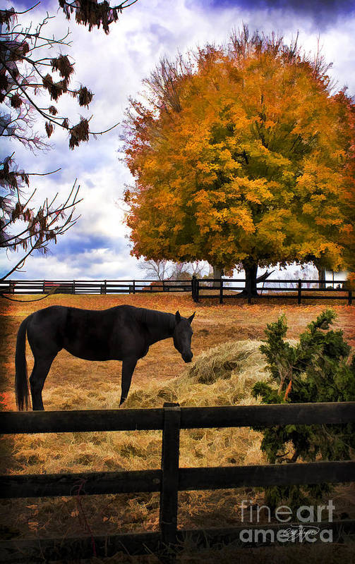 Horse Canvas Art Print featuring the photograph Sunday Afternoon by Cris Hayes