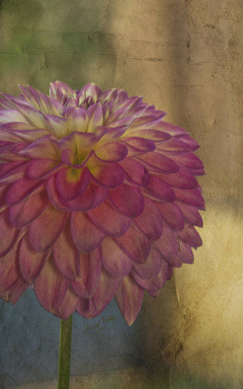 Flower Art Print featuring the photograph There's Always Next Year by Trish Tritz