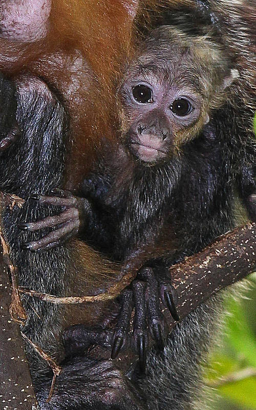 Mom Art Print featuring the photograph Baby Saki by Elizabeth Hart