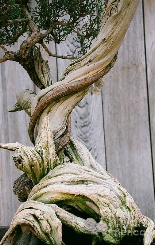 Tree Art Print featuring the photograph Bonsai by Dean Triolo