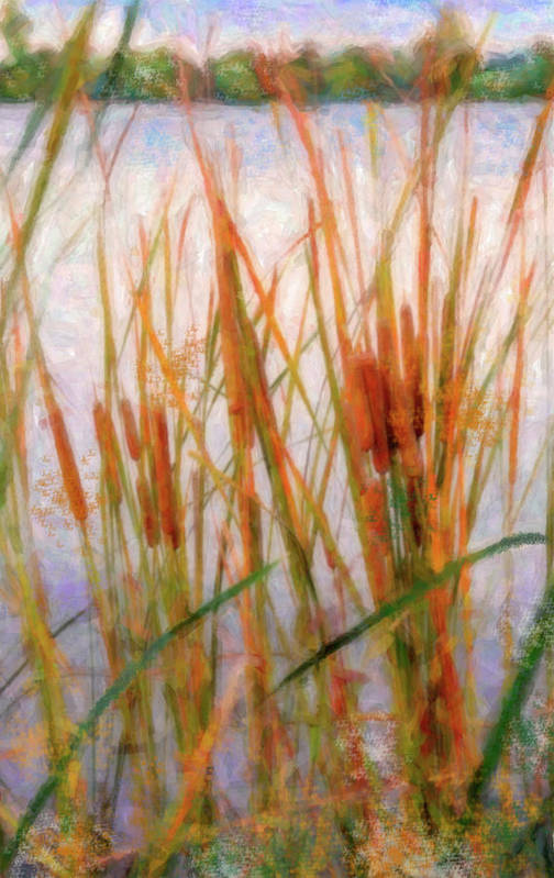 Cattails Art Print featuring the photograph Cattails By The Lake by Betty LaRue