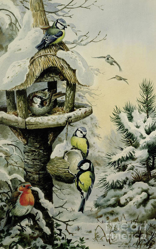 Blue Tits;great Tits; House Sparrows; Robin; Winter Bird Table; Snow; Tree; Fir Tree; Birds Art Print featuring the painting Winter Bird Table With Blue Tits by Carl Donner