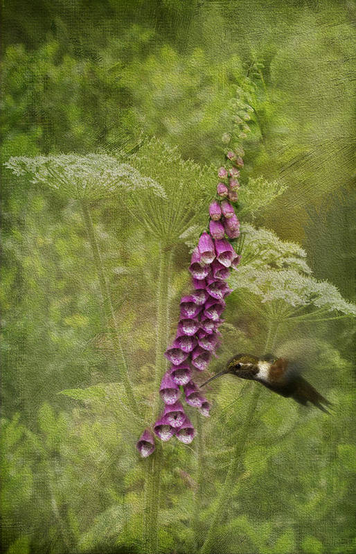 Foxglove Art Print featuring the photograph Foxglove Queen Ann's Lace And The Hummingbird by Diane Schuster
