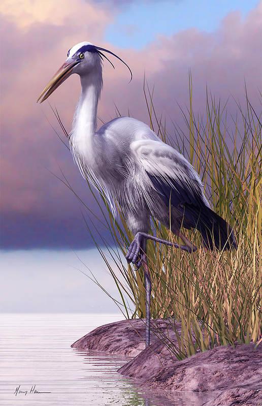 Great Blue Heron Art Print By Gary Hanna