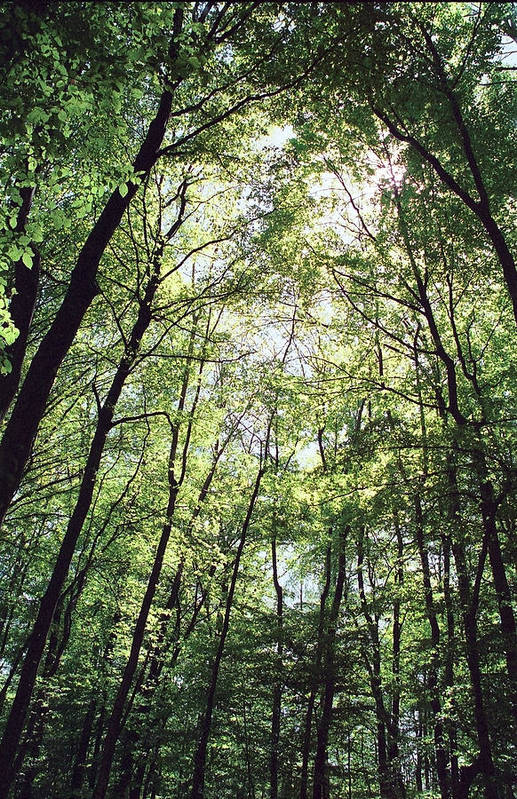 Nature Art Print featuring the photograph Grove by Patrick Kessler