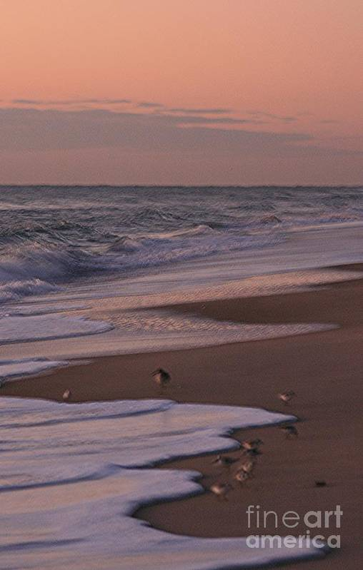 Beach Art Print featuring the photograph Morning Birds At The Beach by Nadine Rippelmeyer