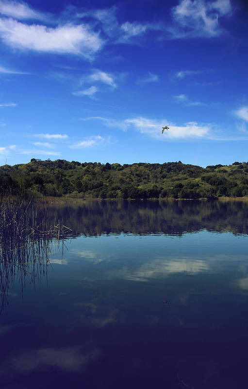 Lafayette Reservoir Recreation Area Print featuring the photograph Regardless Of The Blues by Laurie Search