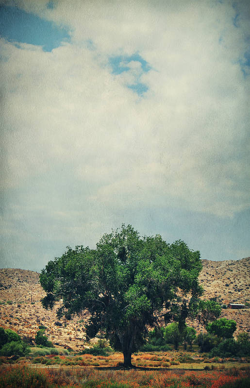 Big Morongo Canyon Preserve Art Print featuring the photograph Some Days I Believe by Laurie Search