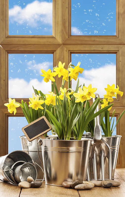 Spring Print featuring the photograph Spring Window by Amanda Elwell