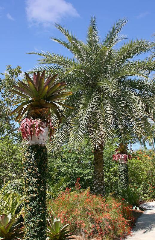 Palm Art Print featuring the photograph Tropical Garden by Kim Hojnacki