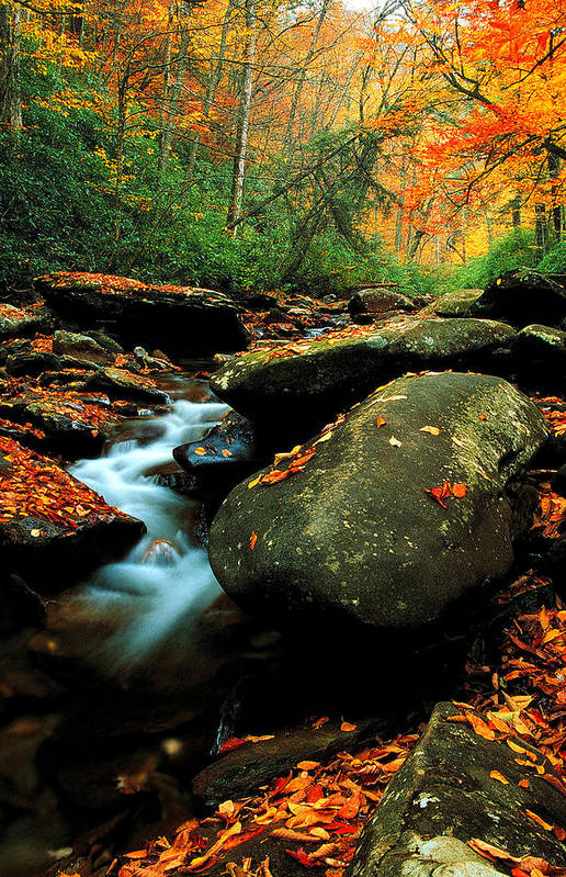 Autumn Landscapes Art Print featuring the photograph Autumn Stream by Chuck Wickham