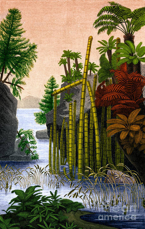 Science Art Print featuring the photograph Plants Of The Triassic Period by Science Source
