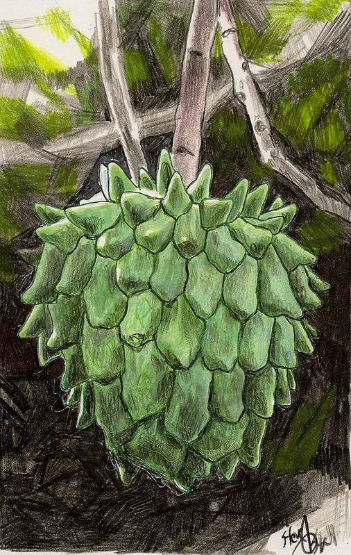 Fruit Art Print featuring the drawing Rollinia by Steve Asbell