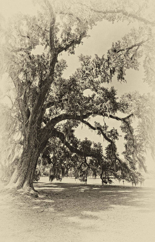 Evergreen Plantation Art Print featuring the photograph Southern Comfort Sepia by Steve Harrington
