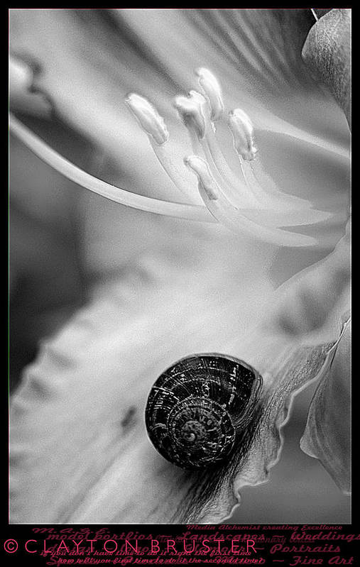 Clay Art Print featuring the photograph B And White Floral With Snail by Clayton Bruster
