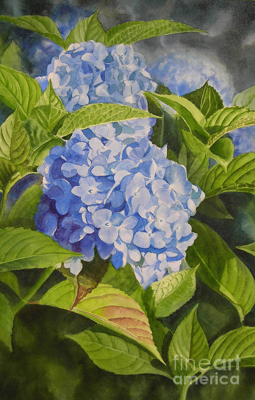 Blue Hydrangea Art Print By Sharon Freeman