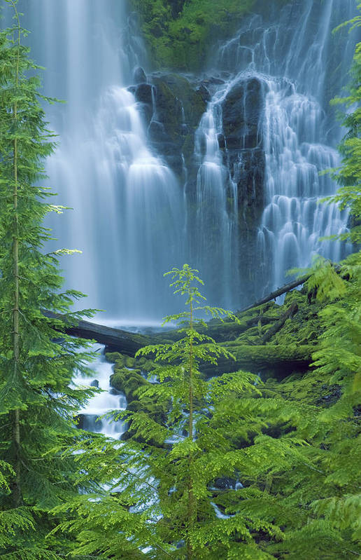 Amazing Art Print featuring the photograph Lower Proxy Falls by Greg Vaughn - Printscapes