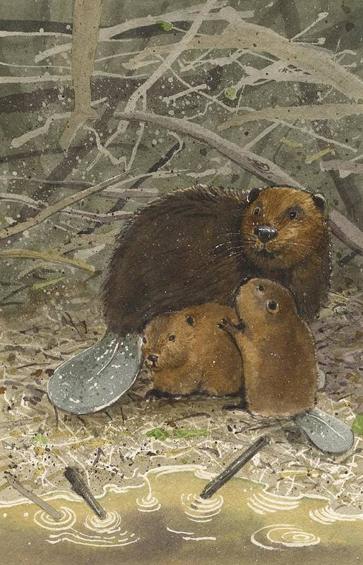 Beavers Art Print featuring the painting Beavers by Denny Bond