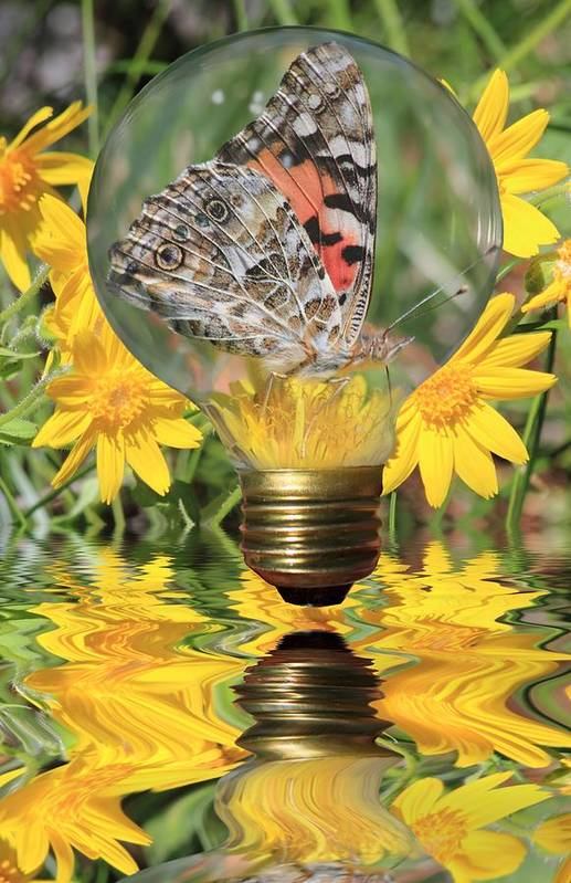 Butterfly Art Print featuring the photograph Butterfly In A Bulb II by Shane Bechler