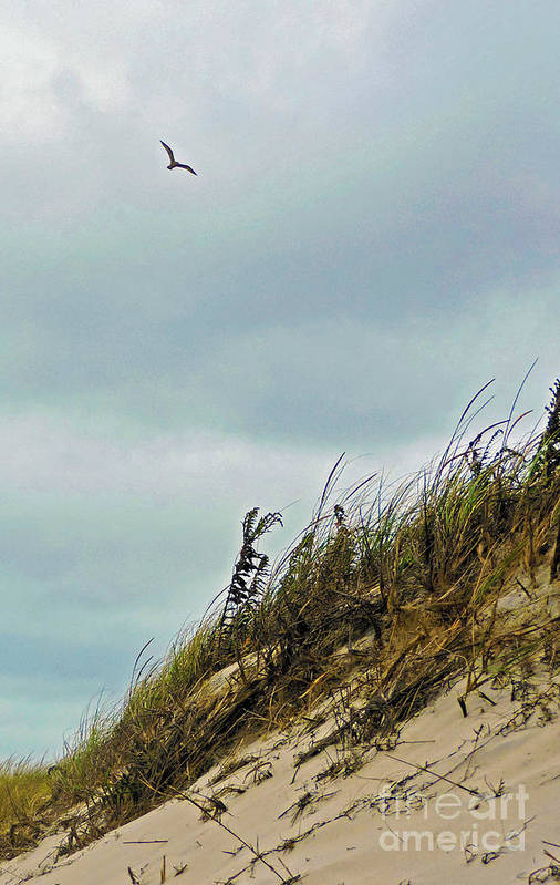 Island Beach State Park Art Print featuring the photograph Catching A Ride by Helene Guertin