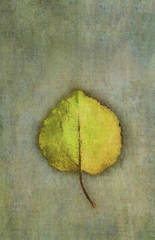 Photography Art Print featuring the digital art One Leaf Beauty by Terry Davis
