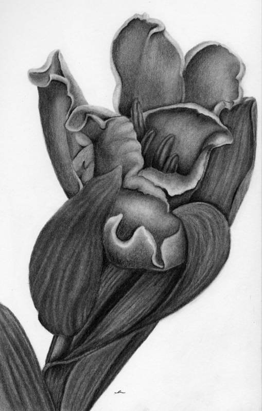 Charcoal Flower Drawings Page 2 Of 5 Fine Art America