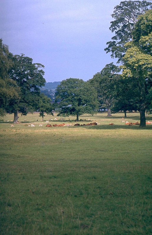 Great Britain Art Print featuring the photograph Pasture by Flavia Westerwelle