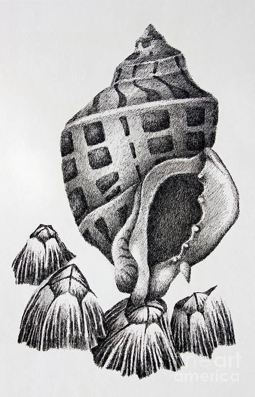 Seashell Print Print featuring the drawing Seashell And Barnacles by James Williamson