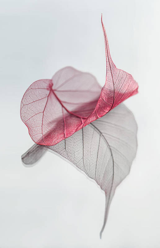 Leaf Art Print featuring the photograph Uplifted by Maggie Terlecki