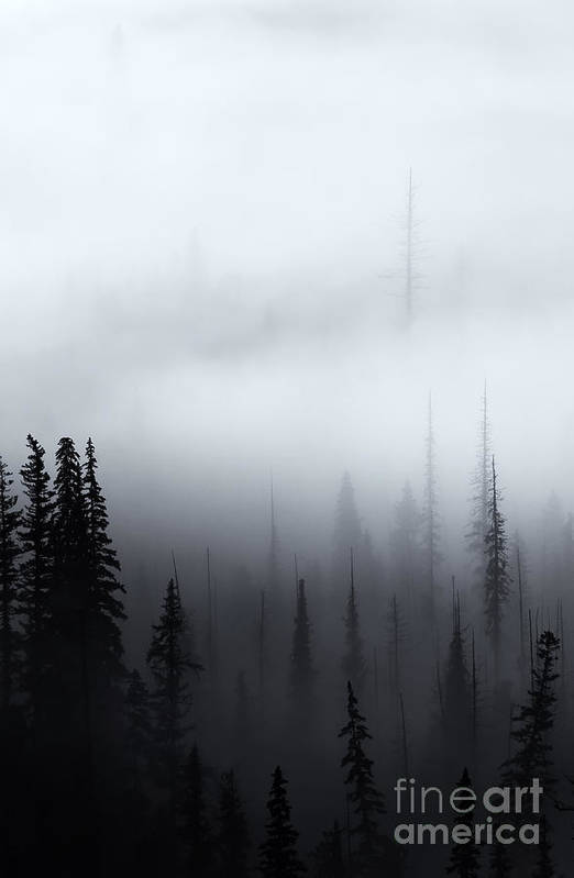 Forest Art Print featuring the photograph Piercing The Clouds by Mike Dawson