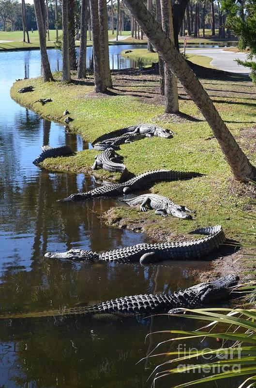 Nature Art Print featuring the photograph Alligators Beach by John-Leon Halko