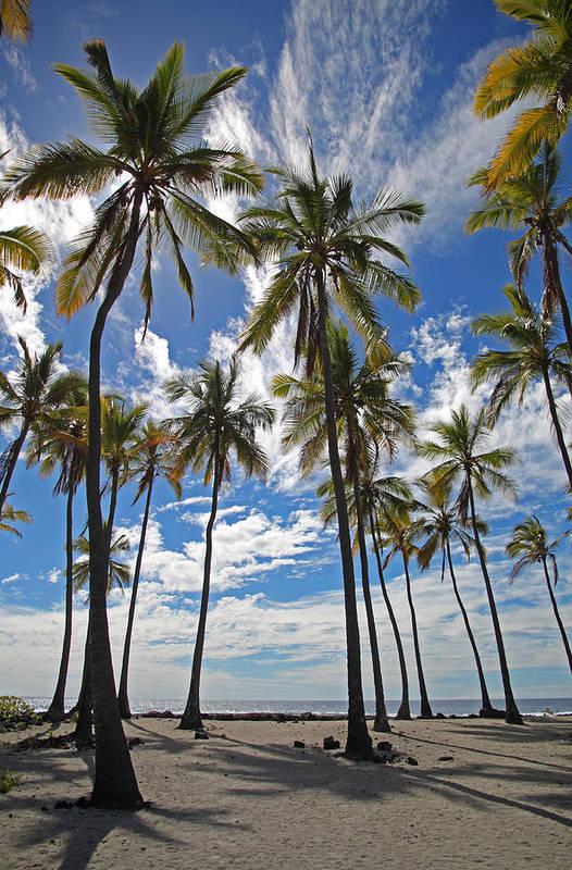 Big Island Art Print featuring the photograph Big Island Hawaii Palm Stretch by Joseph Semary