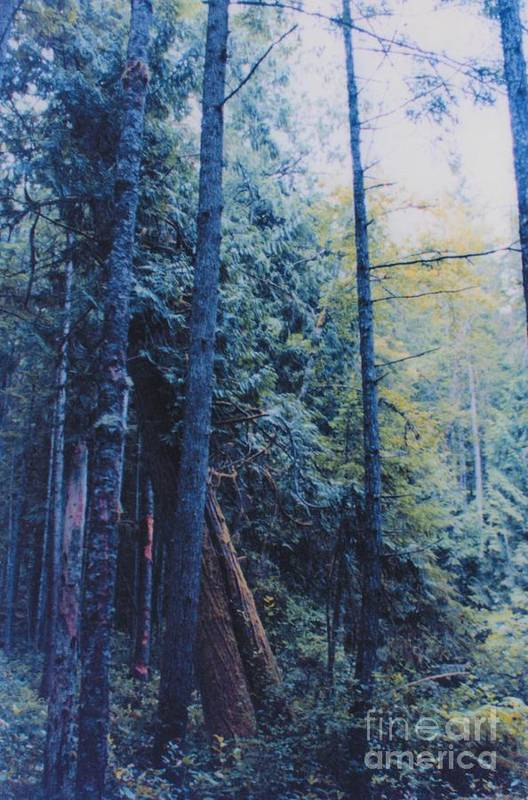 First Star Art Print featuring the photograph Blue Forest By Jrr by First Star Art