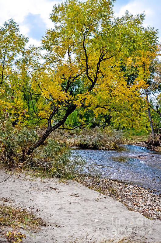 Fall Art Print featuring the photograph Cache La Poudre by Baywest Imaging
