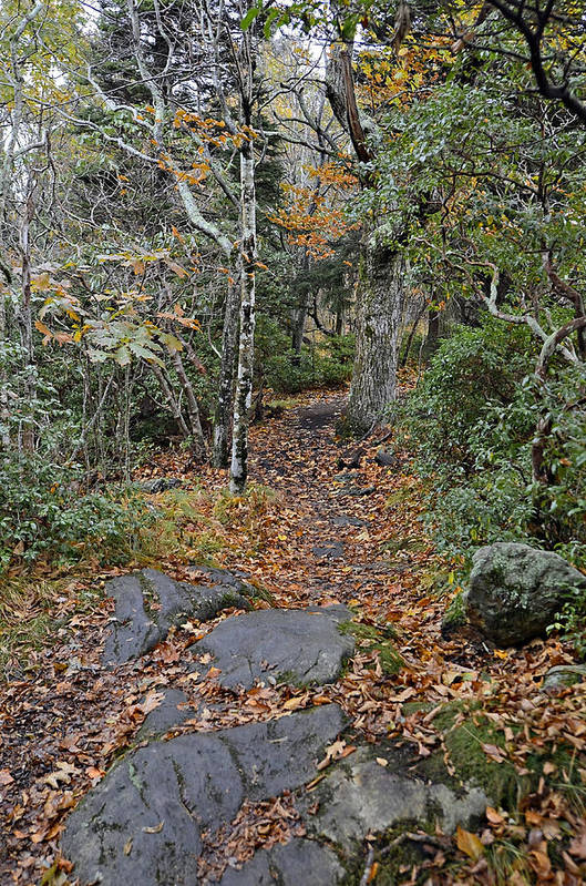 Trail Art Print featuring the photograph Deep In The Woods by Susan Leggett