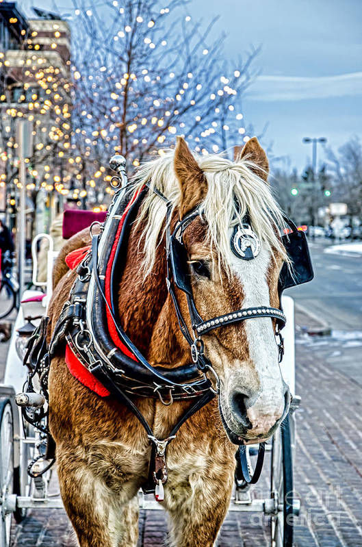 Horse Art Print featuring the photograph Donald 2 by Baywest Imaging