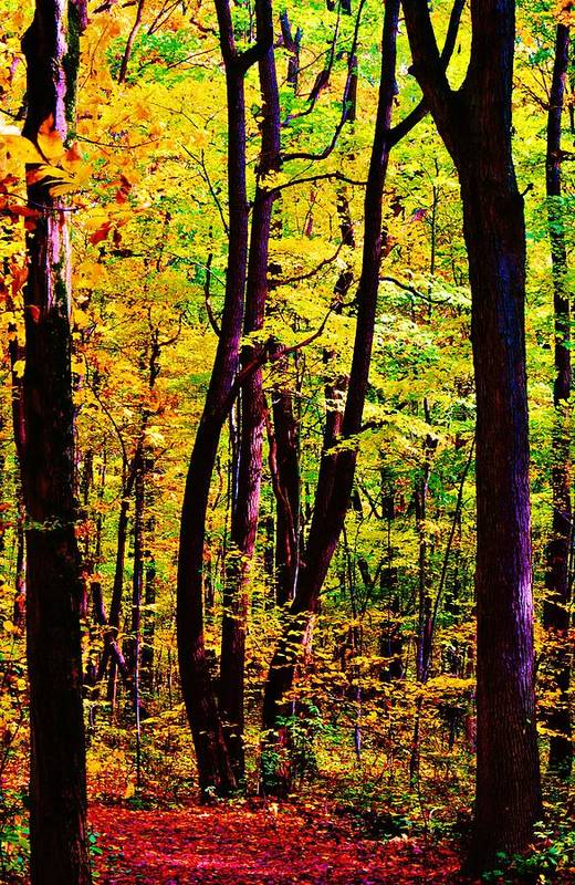 Fall Art Print featuring the photograph Forest Waves by Daniel Thompson