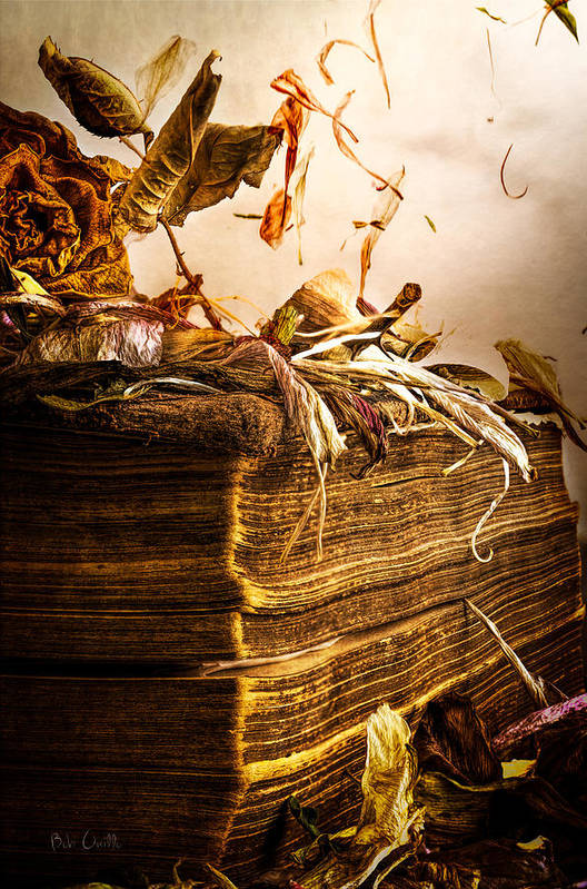 Book Art Print featuring the photograph Golden Pages Falling Flowers by Bob Orsillo