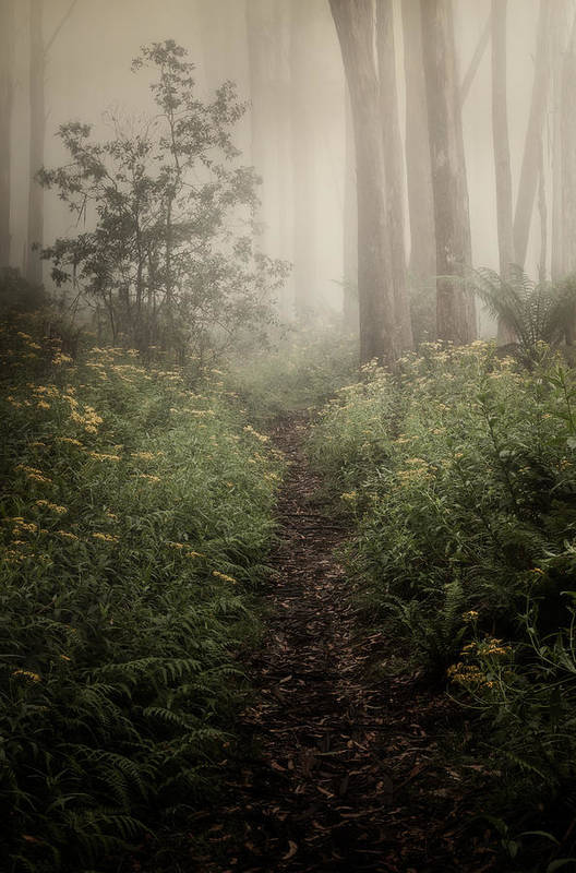 Fog Art Print featuring the photograph In Silence by Amy Weiss