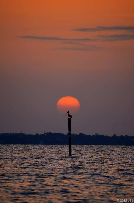 Pelican Art Print featuring the photograph Pelican Sunrise Silhouette On Sound by Jeff at JSJ Photography