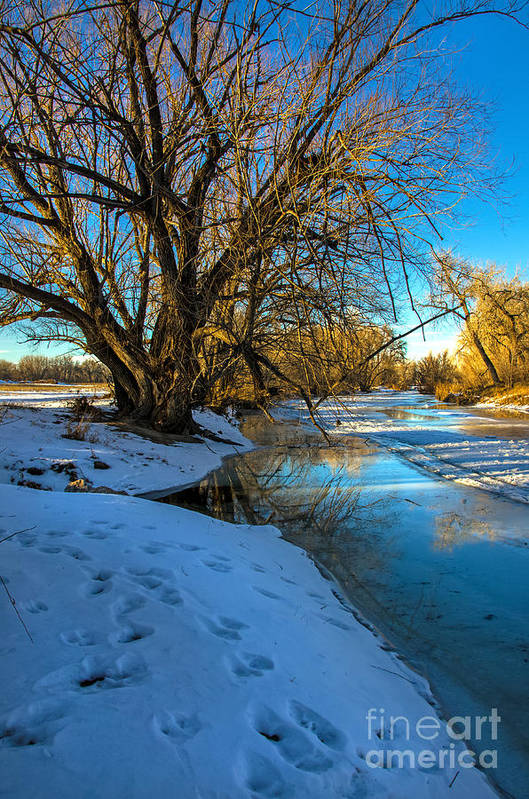 Winter Art Print featuring the photograph Poudre River Ice by Baywest Imaging