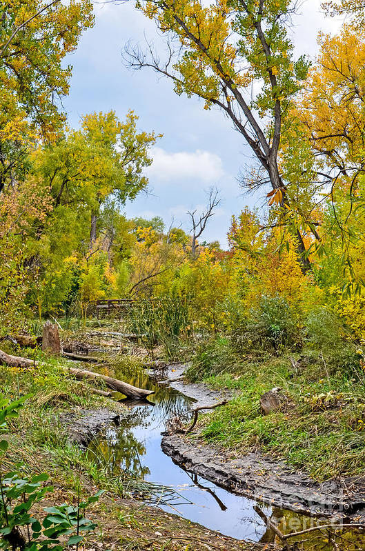 Fall Art Print featuring the photograph Poudre Walk-2 by Baywest Imaging